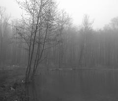 Fog II (elkarrde) Tags: trees winter blackandwhite lake monochrome fog forest blackwhite smartphone android 2012 twop htc onex winter2012 htconex