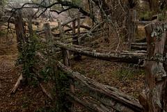 Old Cedar Pens (shufisher) Tags: ranch old rural decay farm cedar granite