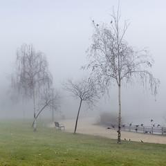In the fog (Pilar Azaña Talán ) Tags: madrid parque winter españa cold lago árboles europa aves pájaros invierno frío vegetación atmósfera comunidaddemadrid thegalaxy lastdayoftheyear inthefog abigfave enlaniebla 100commentgroup últimodíadelaño pilarazaña natureandpeopleinnature rememberthatmomentlevel1 creativephotocafe 31dediciembrede2012