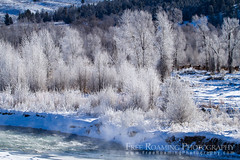 Elk Amongst Hoarfrost (Free Roaming Photography) Tags: trees winter usa white snow cold west tree male ice water weather animal animals female river frozen nationalpark frost adult hoarfrost wildlife young freezing bull steam freeze cottonwood northamerica wyoming females elk mammals herd grandteton jacksonhole cottonwoods grandtetonnationalpark grosventre cottonwoodtrees nationalelkrefuge grosventreriver