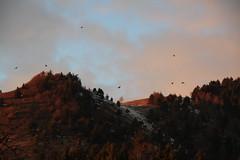 Colori in volo (La.Bu) Tags: life sky orange moon mountain lake japan canon lago tramonto natura luna silence montagna atmosfera amore vita silenzio nuture atmophere bossico