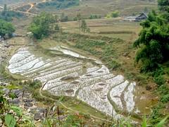 Trekking in Sapa (In My Shoes Travel) Tags: mountains trekking landscape hiking vietnam backpacking tribes ricepaddies sapa hmong blackhmong
