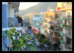 Sundown Road... (Salvatore Adelfi) Tags: sunset blur rose tramonto sundown bokeh rosa napoli camaldoli sfocato epomeo soccavo