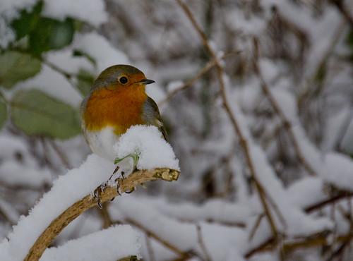 Winter bird 2 - crop ©  Still ePsiLoN