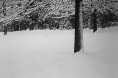 Pinhole Tree Snow 4 (pineconemonk) Tags: camera light bw copyright white snow black cold film mystery bulb analog digital lens toy lost hope holga exposure pin alone hole no tripod dream nh millennium pinhole dreaming plastic silence portsmouth act purity dmca f175 135pc