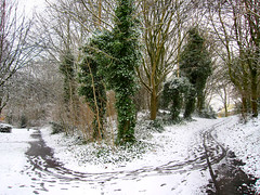Fork in the path. (ronsaunders47) Tags: trees winter snow warrington cheshire paths birchwood