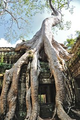 JE T'AURAI !!! (louis.foecy.fr) Tags: temple cambodge destruction ruine thom angkor arbre angkorthom angkorvat fromager