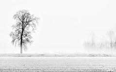 Nebbia #2 - Fog #2 (Emiliano_Bg) Tags: tree fog nebbia albero soncino