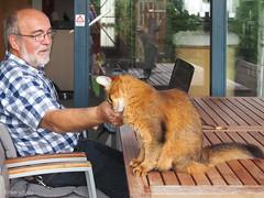 Friends forever (2015) (Finn Frode (DK)) Tags: friends pet cats animal cat garden table denmark person outdoor rags olympus cuddle som somali verandah somalicat omdem5 dusharatattersandrags finnfrode