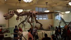 Museum of Natural History (joschibelami) Tags: museumofnaturalhistory newyork manhatten 2016 vacation usa