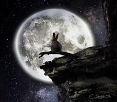 PonderingTheUniverse (clabudak) Tags: moon bunny rabbit night ledge universe stars