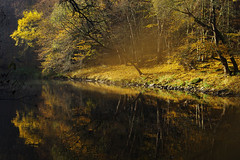 Morning magic on Dyje river (Gregor  Samsa) Tags: czech czechrepublic eskrepublika ceskarepublika cesko esko czechia czechland czechlands bohemia moravia autumn fall october rowing boat dyje thaya river exploration outdoor outdoors journey tree trees forest colours colors podyj podyji nationalpark light sunlight