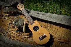 iUke (Mini Ukulele) in a dead tree with an ear of grain (FHgitarre) Tags: ukulele iuke miniukulele pocketukulele musicalinstrument musikintrument