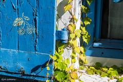 Volet (Jean-Michel SZEKANY) Tags: sonya7s nantes trentemoult raisin volet plantes fenetre feuilles maison decoration paysdelaloire france fr