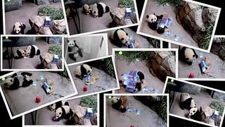 Snapshots of Bei Bei's First Birthday