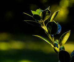 Night; becoming day.... (tomk630) Tags: virginia nature sunrise light dark bokeh plant colors usa wow