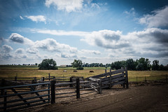 Chutes and fences (Carolannie: out and about, not lost yet) Tags: sonyrx100m2 colorado ruralcolorado fencefriday fences hff horse scenery bouldercountyco summer endofsummer acoolsummerdayinbouldercounty horses chutes