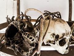 (Emifulio81) Tags: iban tribe dayak skull teschi indigeni borneo jungle sarawak malesia malaysia