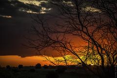 2016.0044 (Adriano Aquino) Tags: sun nature sunset light marvellous tree sol pordosol atardecer entardecer