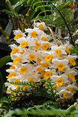 20160928-DSC_8832 (rosemaree905) Tags: hobart flower yellow red white duck garden spring nikon nikond7100