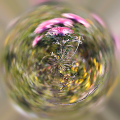 Wildflower (Mike - through my eyes) Tags: polar wildflower lesueur nationalpark affinityphoto curved tangle twirl abstract