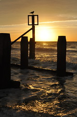 The new day brightens up (Kirkleyjohn) Tags: suffolk sunrise sunshine light silhouette groyne lowestoft lowestoftbeach sea seaside seashore seascape seagull