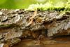 ausschwärmen (Don Bello Photography) Tags: sommer 2016 hornisse bärenpark müritz müritznationalpark hornissennest panasonicfz1000 lumixfz1000 mecklenburgvorpommern norddeutschland northerngermany deutschland europa macro reinhardbellmann donbellophotography acdsee