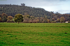 Countryside [EXPLORED] (inFocusDCPhoto  Young Spanish photographer) Tags: espaa tree verde green landscape arbol countryside spain nikon europa europe paisaje campo santander cantabria lacavada d7000
