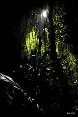 Night Safari, SG (Shakaib Uzzaman Khan) Tags: clarkquay nightsafari