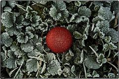 ... IMG_2091 (*melkor*) Tags: christmas xmas winter red green art ice nature grass project dark geotagged frozen experiment conceptual picturesque glassball melkor trashbit afrozenxmasproject itsalmostxmas