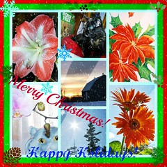 Merry Christmas ~ Happy Holidays To All My Friends & To All! (silverbox2: Willow Is Purring) Tags: christmas flowers sunset red snow orchid colors collage mystery barn colorful colours tortie colourful whatilove happyholidays merrychristmas merrychristmasandahappynewyear amaryrillis everydayissunday awwwed~cuteadorablephotos holidaysofallkinds misssteviessensationalshots picmonkey smiles~milesandmilesandpilesofsmiles sendingyouhugsandlove tortishelll