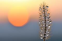 Auguri per un luminoso 2013 (STE) Tags: sunset macro photography photo droplets tramonto foto photographer photos bokeh fotografia stefano fotografo gocce trucco blueribbonwinner tamron90 goccioline zush citrit stefanotrucco