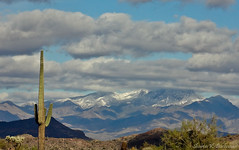 Four Peaks (sbuck1205) Tags: cactus snow supersitionmountains