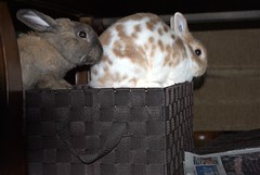 Under the Table (bagsgroove) Tags: bunnies