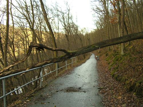 Umgestürzter Baum auf Usa-Radweg bei Ziegenberg