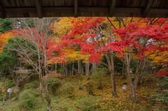 Manshu-in, Kyoto /  (Kaoru Honda) Tags: autumn nature japan landscape temple japanese nikon kyoto     kansai   japon  redleaves  kinki  manshuin     d7000