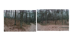 (About Landscapes) Tags: pano forest two diptych nature winter path between woods cold newtopography topography artphotography przemyslawstroinski przemysławstroiński przemyslaw stroinski landscape fineartphotography przemyslawstroinskiallrightsreserved photography sigma przemyslawstroinskiphotography circumscription milieu environment allrightsreservedprzemyslawstroinski landscapes art photo existing ambientlight demandedbythelandscape stories documentary