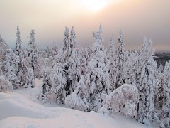 Koli - Finland (Sami Niemeläinen (instagram: santtujns)) Tags: winter snow nature suomi finland landscape forrest north scandinavia lumi talvi puu maisema metsä luonto koli karjala lieksa carelia tykkylumi juuka pohjois