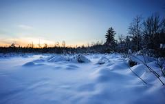 White Blanket (Andrei SE) Tags: trees winter sunset snow canada nikon ottawa marsh bog ais 18mm f35 d700