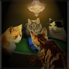 The Executive Board (jaci XIII) Tags: cat humor gatos fantasy fantasia