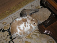 Sweetpea & Toby Resting (bagsgroove) Tags: friends bunnies resting