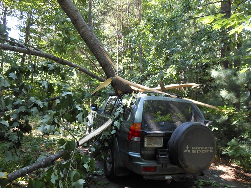 Tree versus Car by Joanna Bourne, on Flickr