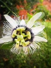 Favorite picture. (Juliana Camêlo) Tags: favorite flower beautiful see flickr paradise photos flor etc edition paisagens coments edição