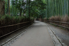 Path of Bamboo in Arashiyama /  (Kaoru Honda) Tags: city winter sunset nature japan landscape temple japanese evening nikon kyoto traditional bamboo arashiyama    kansai     japon  tenryuji   kinki        d7000