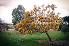 Tree (werxj) Tags: autumn trees plant green nature farm harvest