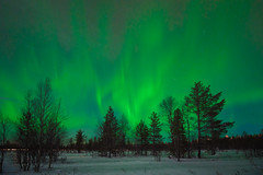 Aurora (Thierry Hennet) Tags: longexposure blue winter sky snow tree green nature night zeiss stars landscape outdoors finnland sony aurora lapland moonlight northernlights luosto a900 coldtemperature cz1635mmf28