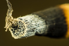 Wood (nils.rohwer) Tags: wood closeup fire nikon extreme d600 extensiontubes