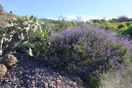 Lavender and Cactus