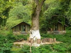 Il guardiano delle baite,Albania (Cartarughe) Tags: albania tree facce face caras centenario