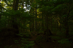 Alouette Mountian (Kristian Francke) Tags: alouette mountian golden ears provincial park plants trees nature natural trail path green brown gold sunset tamron